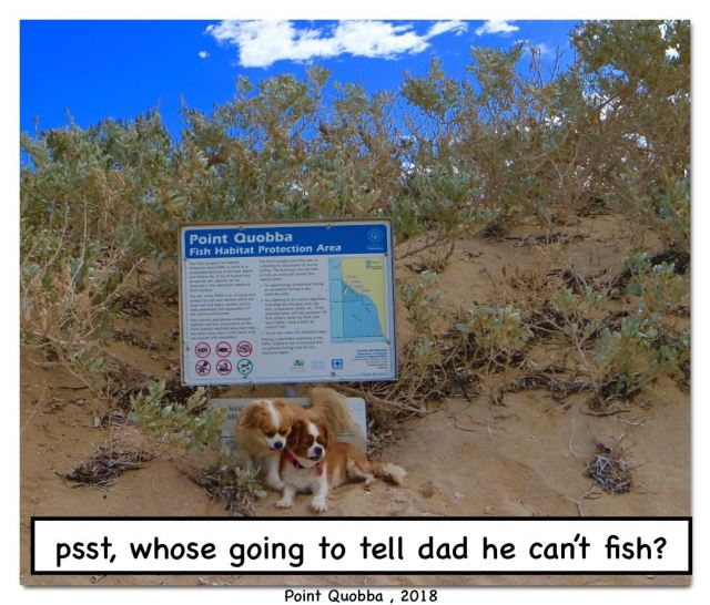 quobba blowholes psst who going to tell dad cant fish.jpg